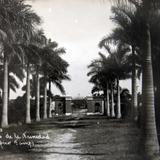 Palmeras de La Trinidad hacia 1920-1940