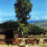 Cuidadora de Chivas de Oaxaca en 1966