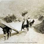 CARGADORES DE MADERA EN LOS ALREDEDORES DE EL ORO ESTADO DE MEXICO circa 1900-1930