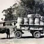 Tipos Mexicanos Vendedores de Petates Hacia 1930-1950