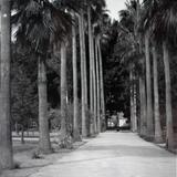 La Alameda Circa 1930-1950