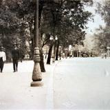 La gran Avenida en el bosque de Chapultepec ( 1910-1930 )