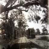 Camino entre Zamora y Jocona Zamora Michoacan. ( 1900-1930 )