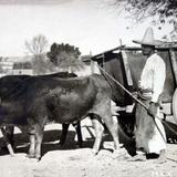 TIPOS MEXICANOS  Un Yuntero Carretero ( 1930-1950 )