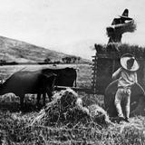 Cosechando Trigo en el estado de Sinaloa Por Hugo Brehme