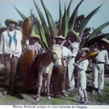 Tipos Mexicanos Sacando Pulque de una hacienda Por C Boullanger