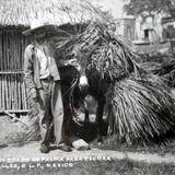 Tipos Mexicanos vendedor de palmas para techar.