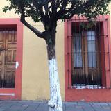 Centro Histórico, arquitectura. Mayo/2017 - Tlaxcala, Tlaxcala