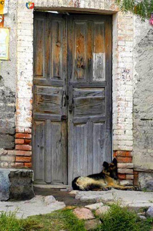 Can guardián