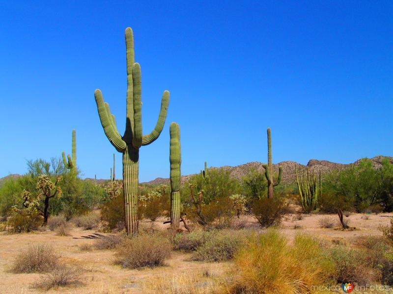 Reserva de la Biósfera El Pinacate y Gran Desierto de Altar