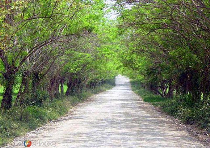 Camino a Tambaque