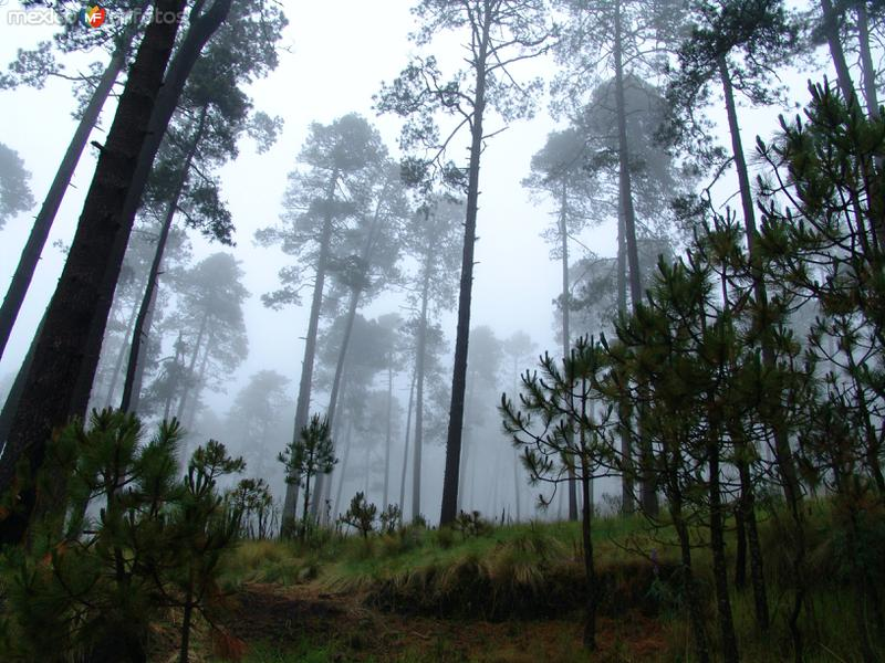 Bosque del Nevado de Toluca