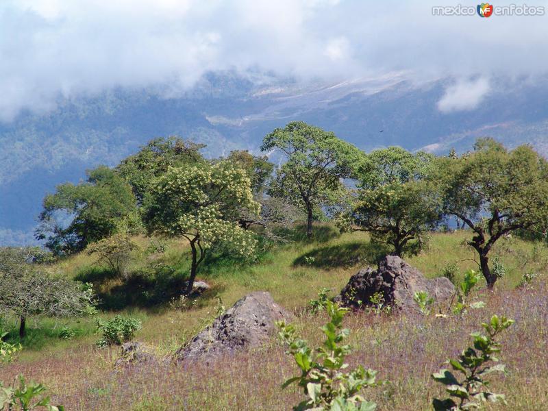 Rocas volcánicas