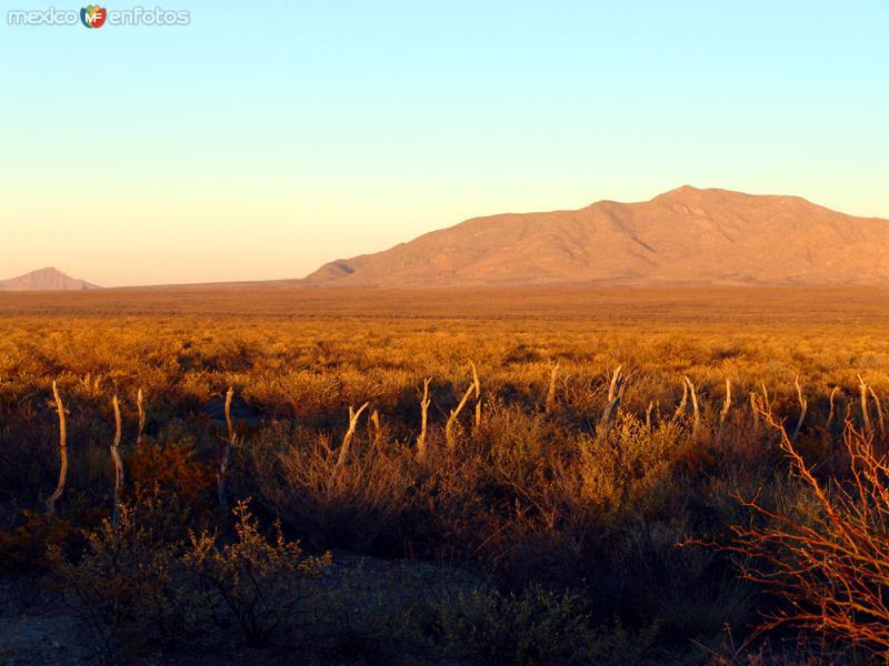 Vista del Bolsón de Mapimí