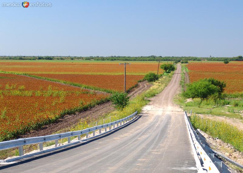 Camino rural y campos de cultivo