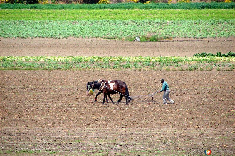 Campesino arando la tierra
