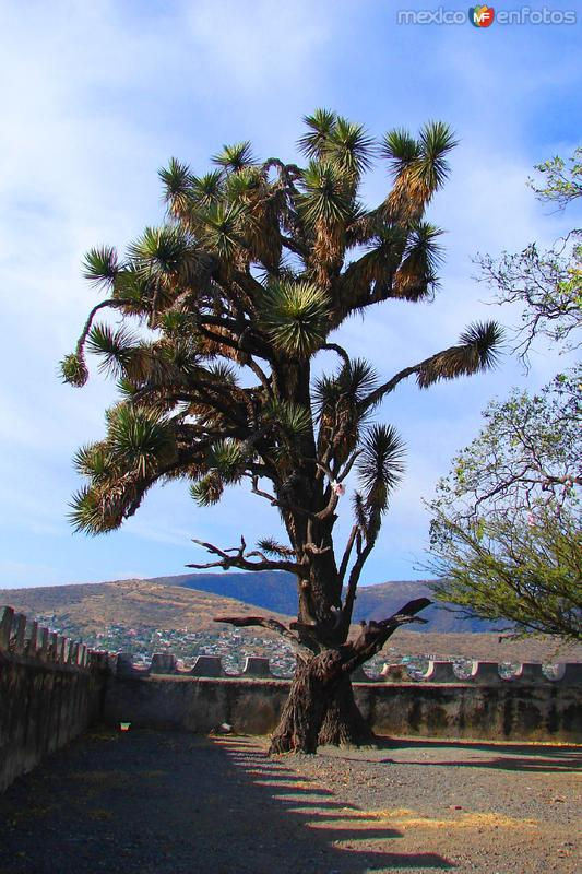 Árbol de palma