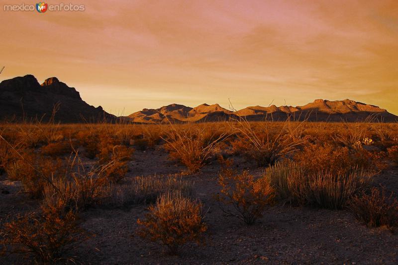 Una noche en el desierto