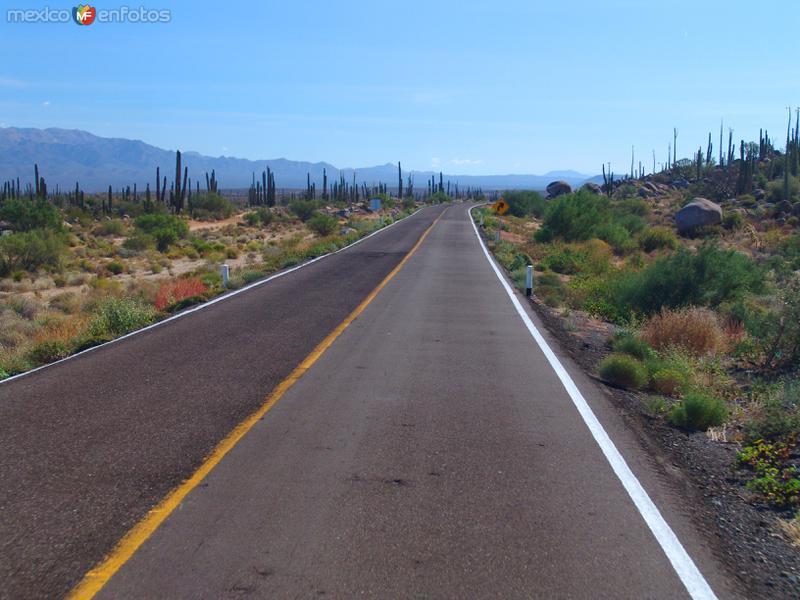 Carretera Transpeninsular (México - 1)