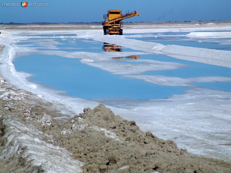 Salinas: Levantamiento de sal de los vasos salinificadores