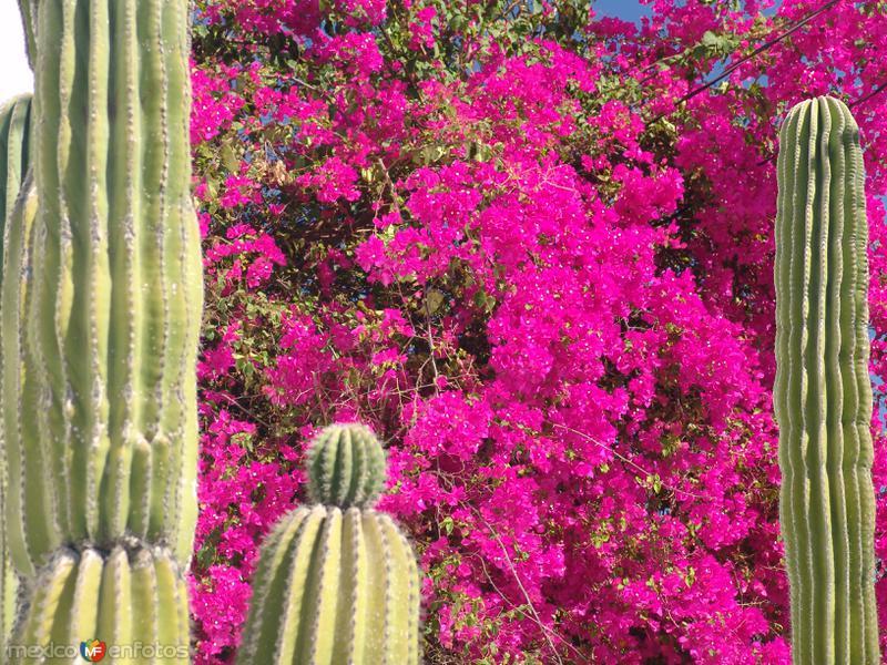 Flora de Todos Santos