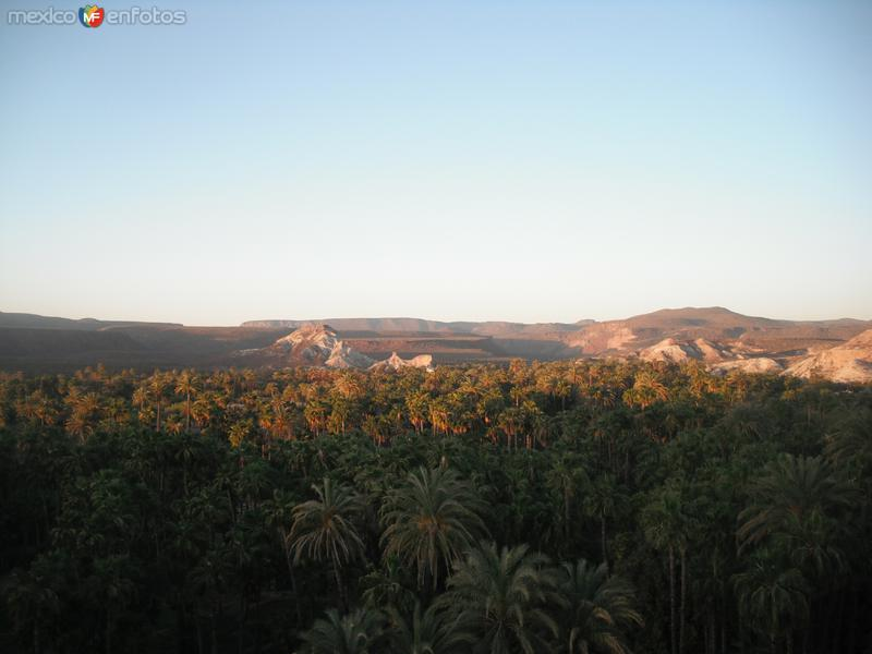 EL PALMAR DE LA PURISIMA
