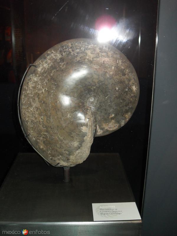 Fòsiles en museo del desierto