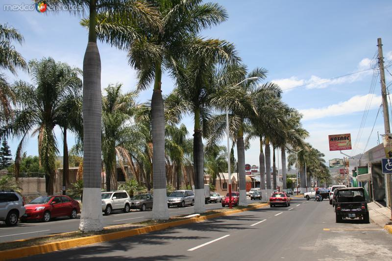 Av. Jacarandas