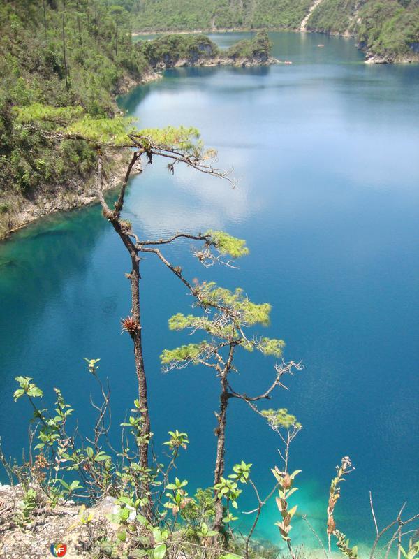 5 lagos