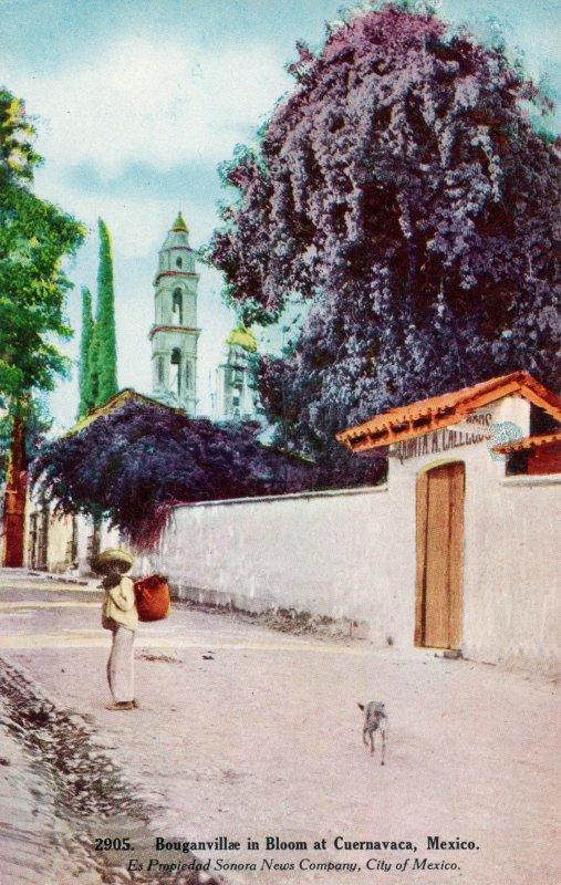 Bugambilias en una calle del barrio de Tlaltenango