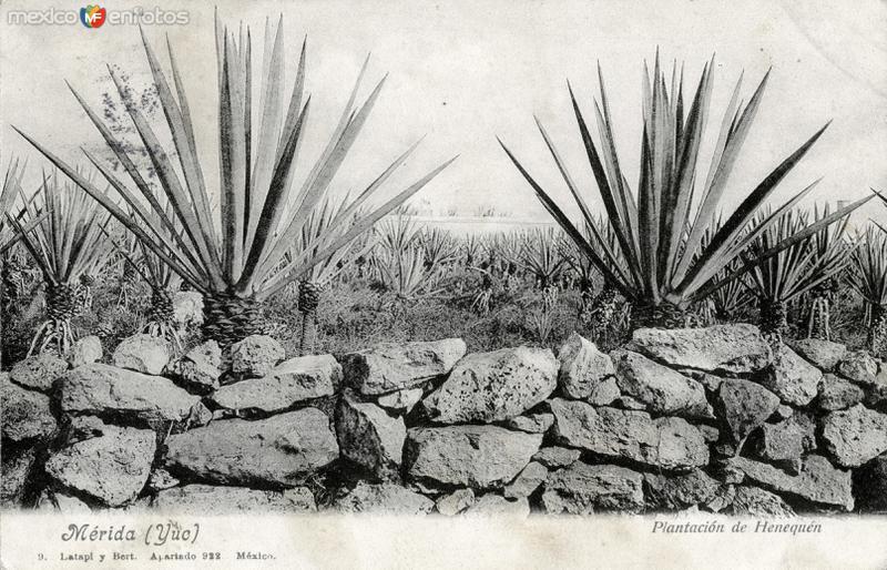 Plantación de henequén