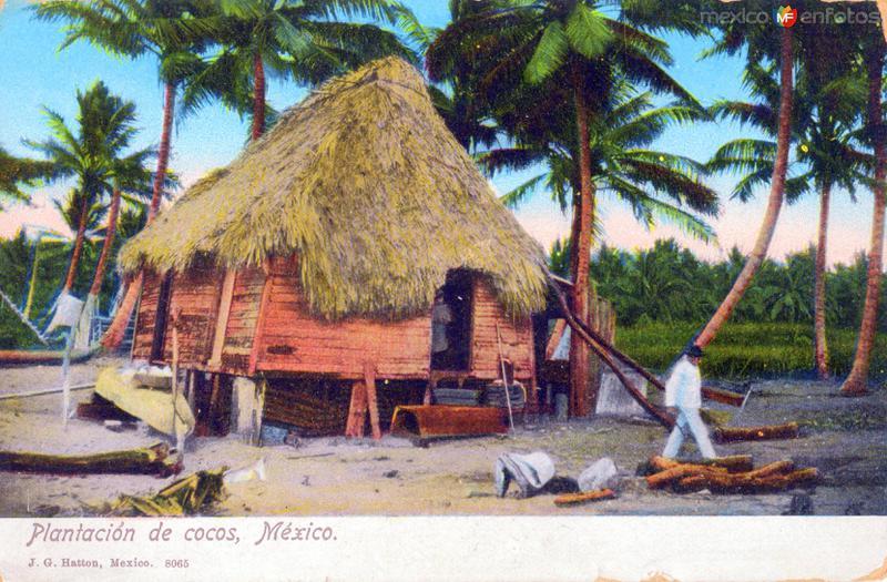Plantación de cocos
