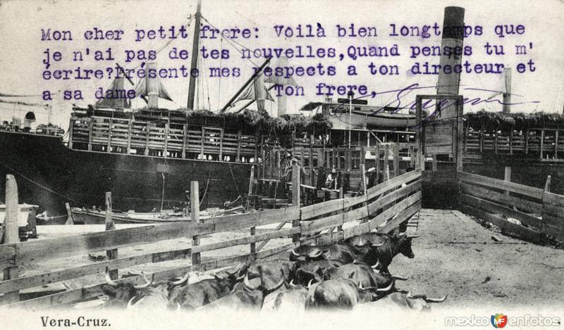 Embarcando ganado en Veracruz
