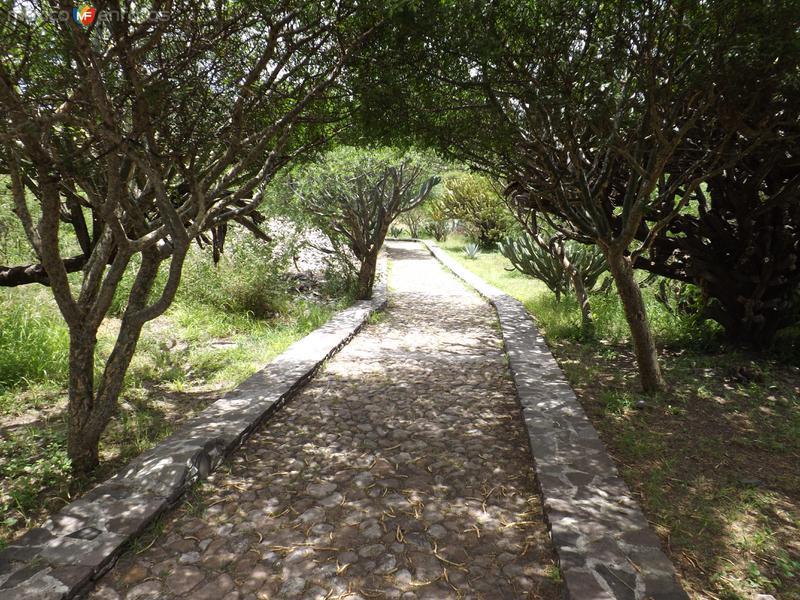 Sendero en la zona arqueológica El Pueblito. Agosto/2012