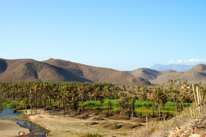 Oasis en San Pedrito