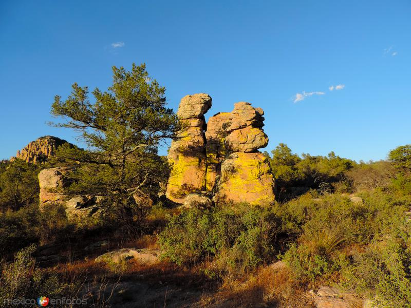 Líquen sobre pilares volcánicos en Majalca, Chihuahua