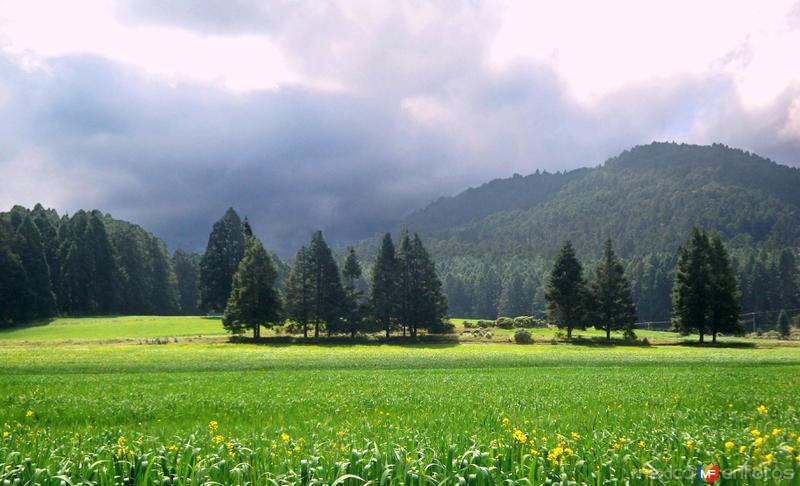 NATURALEZA: Bosques a un costado de la Carretera Federal No. 119 (Chignahuapan - Tlaxco)