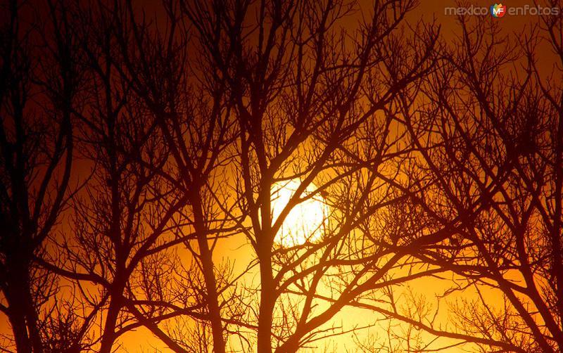 Sol entre niebla tras los árboles