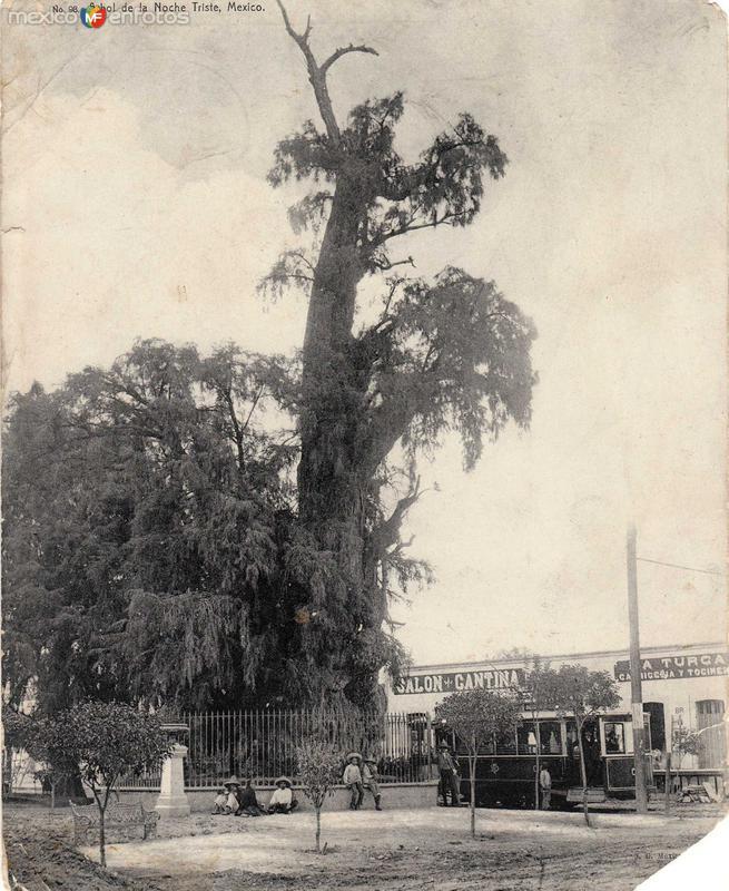 Arbol de la Noche Triste Hacia 1900
