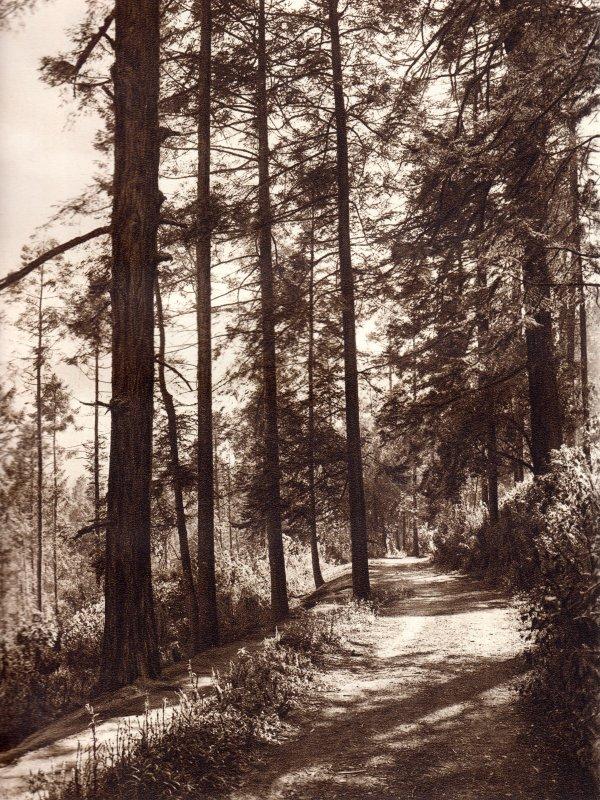 Parque Nacional Desierto de los Leones (circa 1920)
