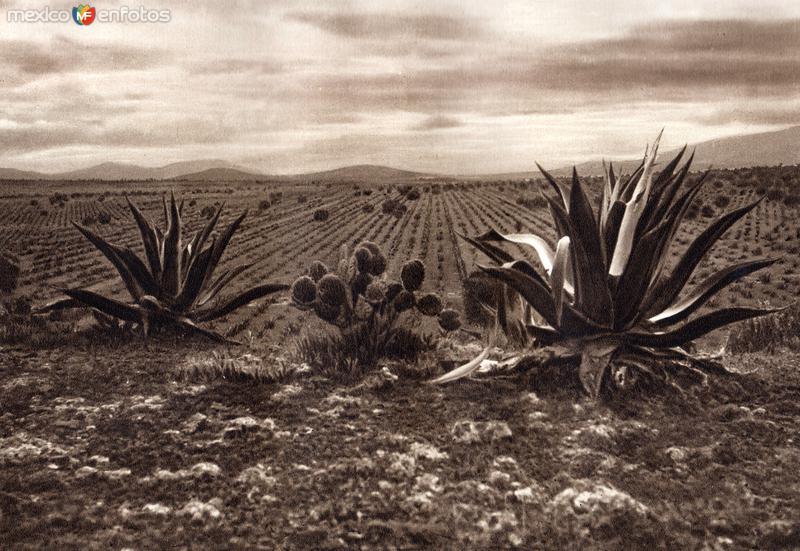 Alrededores de Ometusco (circa 1920)