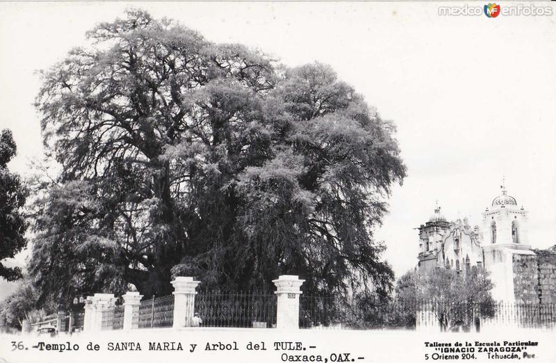 Arbol y templo hacia 1945