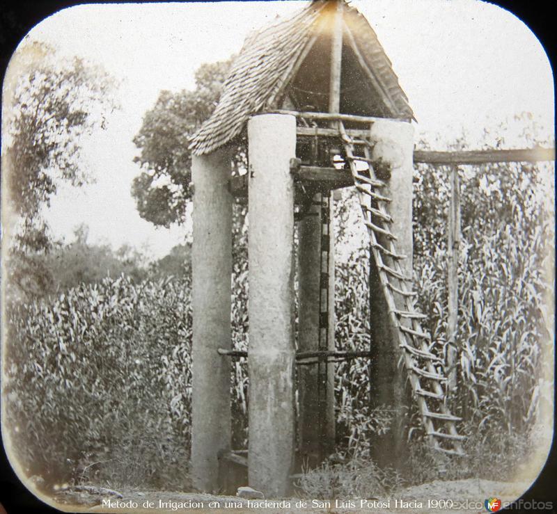 Metodo de Irrigacion en una hacienda de San Luis Potosi Hacia 1900