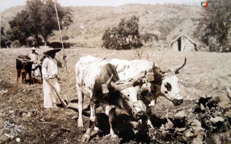 ARANDO LA TIERRA Hacia 1945