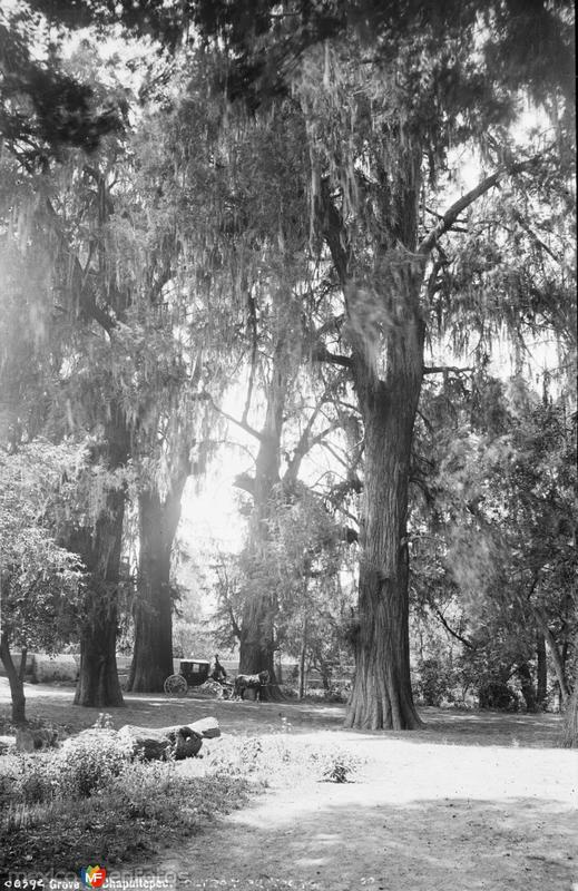 Bosque de Chapultepec (por William Henry Jackson, c. 1888)