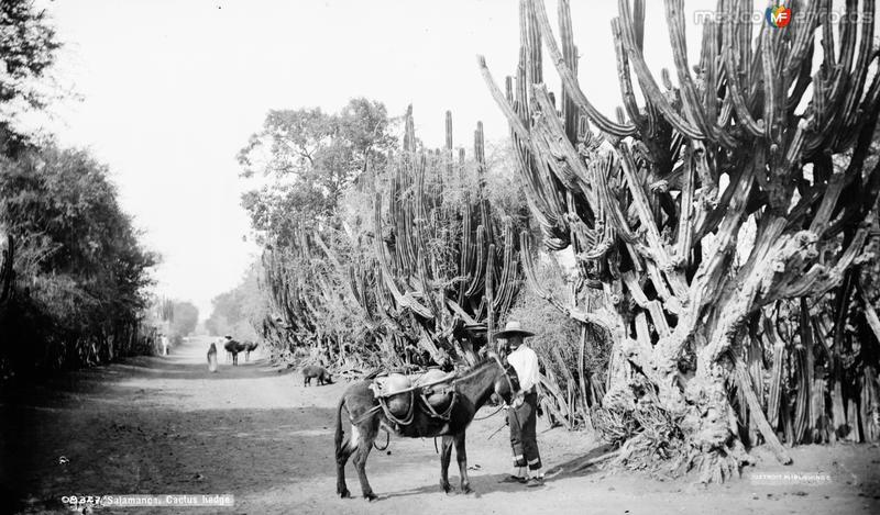 Camino (por William Henry Jackson, c. 1888)