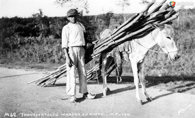 Transporte de madera en burrro