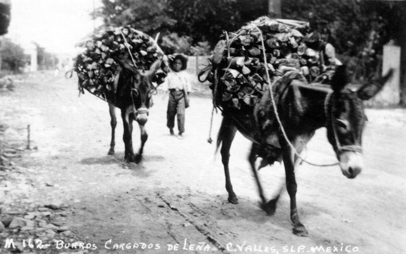 Burros cargados con leña