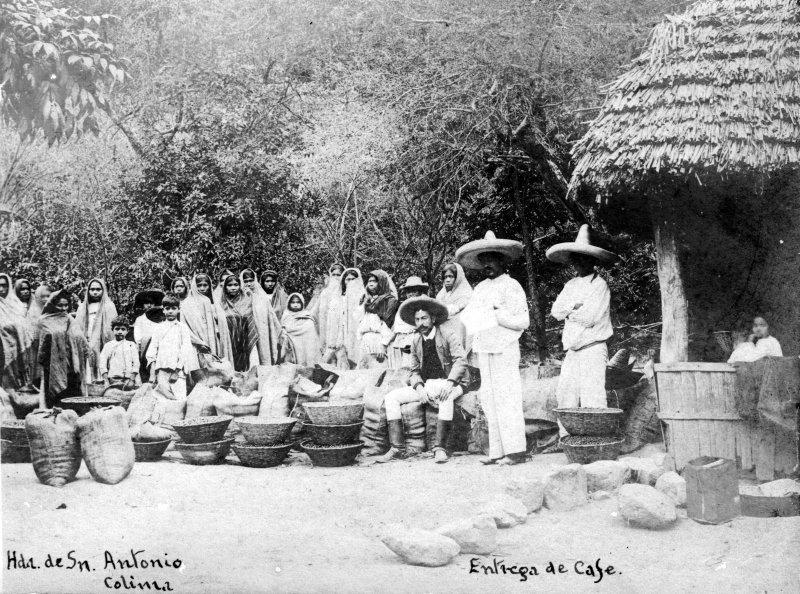Entrega de café en la Hacienda de San Antonio