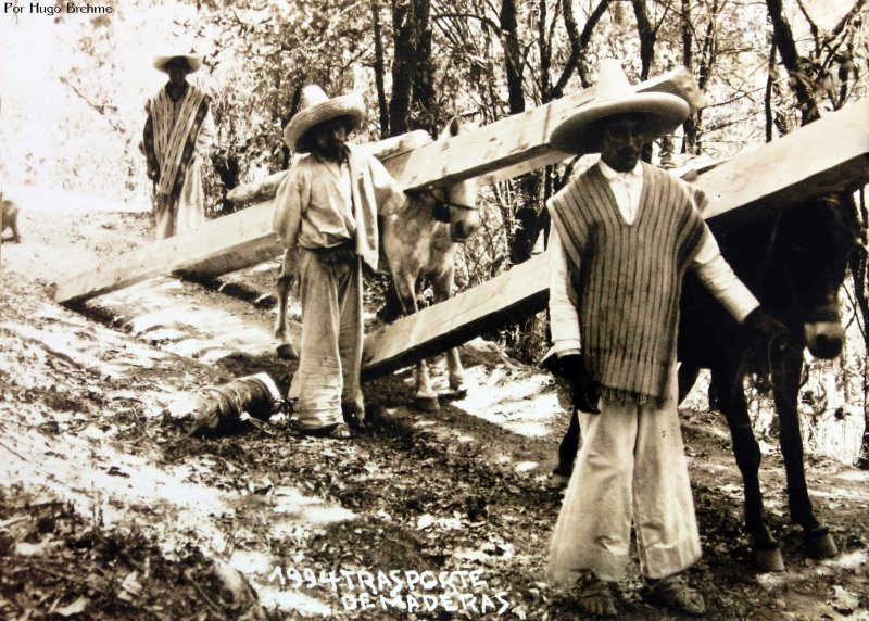 TRANSPORTE DE MADERA Por EL FOTOGRAFO Hugo Brehme Hacia 1930